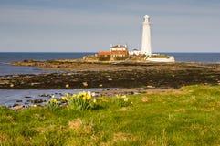 st marys маяка daffodils Стоковые Изображения
