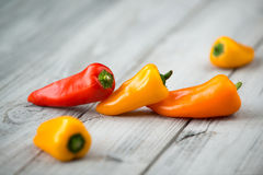 Söt mini- organisk paprika som är röd som är gul och som är orange på en träbakgrund Royaltyfri Bild