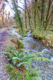 St Nectans Glen Stock Image
