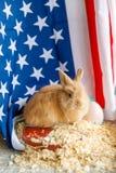 St?ng sig upp av en p?skkanin, mot bakgrunden av amerikanska flaggan arkivfoton