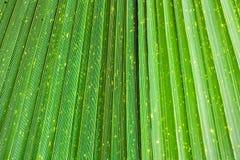 St?ng sig upp av livlig tropisk gr?n bladtextur arkivbild