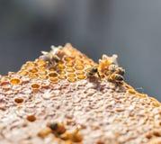 St?ng sig upp sikt av de fungerande bina p? honeycells arkivbilder