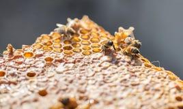 St?ng sig upp sikt av de fungerande bina p? honeycells royaltyfria bilder