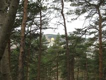 St. Nicholas Cathedral in Kislovodsk. Its Golden domes are visible among the pines. In the foreground high pine trees, and in the distance against the green royalty free stock photography