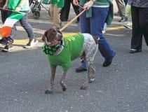 st patrick парада собаки Стоковое Изображение