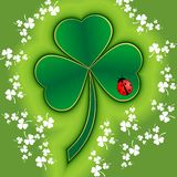 St Patrick clover with ladybug Stock Images