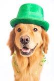 St Patrick de hond van de Dag royalty-vrije stock afbeeldingen