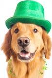st patrick s собаки дня Стоковое Фото