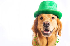 st patrick s собаки дня Стоковые Фото