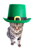 St. patrick s day cat Royalty Free Stock Images