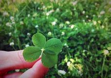 St. Patrick's day. Clover grass sun flower Stock Photography