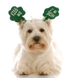 St. Patrick's day dog stock images
