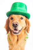 St. Patrick's Day Dog Royalty Free Stock Images
