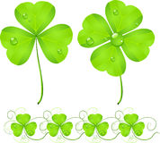 St. Patrick's Day green clover Stock Image