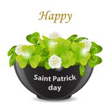 St. Patrick`s Day.Green grass, Shamrock, clover with white flow Stock Photo