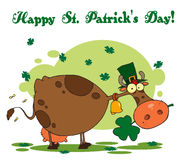 St Patrick's Day Greeting Of A Leprechaun Cow Royalty Free Stock Photos