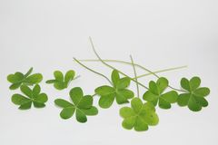 St Patrick's Day, Ireland St Patrick's Day, Clovers, saint patrick's day symbol Stock Image