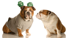 St. Patrick's Day loving Royalty Free Stock Photo