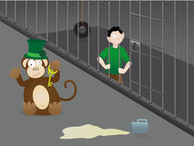 St. Patrick's Day mistake - drinking at the zoo. Man Locked in Cage by Drunk Monkey on St. Patrick's Day Royalty Free Stock Images