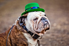 St. Patrick's Day in Moscow Royalty Free Stock Images