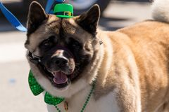 St. Patrick`s Day Parade Chicago 2018. Chicago, Illinois, USA - March 17, 2018, The St. Patrick`s Day Parade is a cultural and religious celebration from Ireland royalty free stock photo