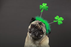 St. Patrick's Day Pug Royalty Free Stock Photography