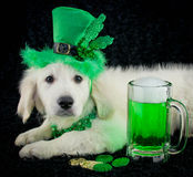 St. Patrick's Day Puppy Stock Photography