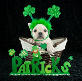 St Patrick's Day Puppy Royalty Free Stock Images
