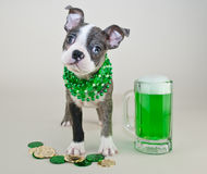 St Patrick's Day Puppy Royalty Free Stock Photos