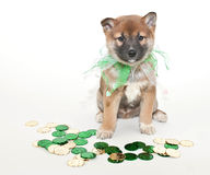 St. Patrick's Day Puppy Stock Images
