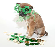 St. Patrick's Day Puppy Royalty Free Stock Images