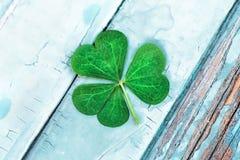 St. Patrick`s Day symbol. Lucky shamrock. Clover green heart-shaped leaves in 1:1 macro lens shot stock image