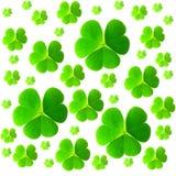 St Patrick ` s dzień Odosobneni koniczyna liście na białym tle zdjęcie royalty free