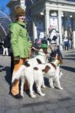 St- Patrick` s Tagesfeier in Moskau Hund des Irischen Setters Stockbilder