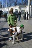 St- Patrick` s Tagesfeier in Moskau Hund des Irischen Setters Lizenzfreie Stockfotos