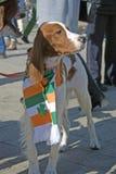 St- Patrick` s Tagesfeier in Moskau Hund des Irischen Setters Lizenzfreie Stockbilder