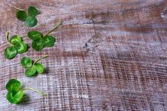 St Patricks与三叶草的天问候在木ba留下框架 库存图片