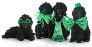 St. Patricks天狗 免版税库存图片
