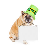 St Patricks Akita Dog Carrying Blank Sign. A cute large Akita breed dog sitting an wearing a tall green St. Patrick's Day hat with clovers while carrying a blank stock photography