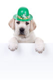 St Patricks Day. A St Patricks Day banner royalty free stock photo