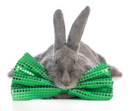 St patricks day bunny Stock Photos