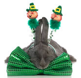 St patricks day bunny Royalty Free Stock Photo