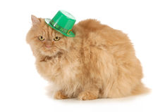 St Patricks Day cat. Looking at viewer isolated on white background Royalty Free Stock Images