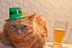 St. Patricks Day Cat. A cute cat wearing a hat on St. Patricks day Stock Images