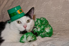 St. Patricks Day Cat. A cute cat wearing a hat on St. Patricks day Stock Photo