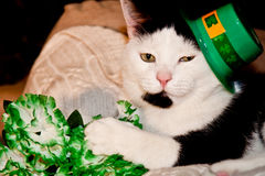 St. Patricks Day Cat. A cute cat playing with flowers on St. Patricks Day Stock Images
