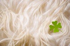 St. Patricks day, clover leaf Stock Photography