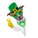 St patricks day dog. Behind a blank banner royalty free stock images