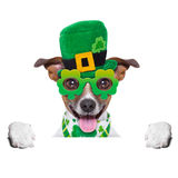 St patricks day dog. Behind blank banner stock photography