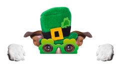 St patricks day dog. Behind blank banner royalty free stock photography